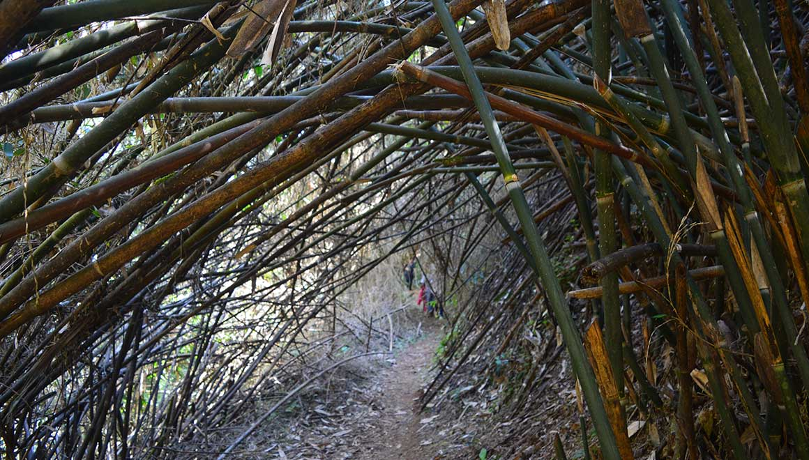 bamboo-arch