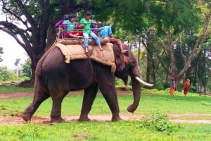 Coorg dubare elephant ride